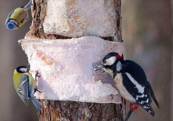 Птицы-Подмосковья-Названия-описания-и-особенности-птиц-Подмосковья-1