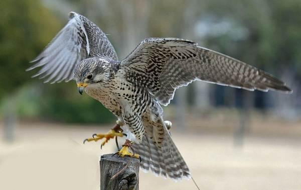 Птицы-Подмосковья-Названия-описания-и-особенности-птиц-Подмосковья-10