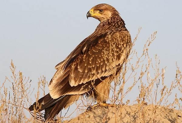 Птицы-Подмосковья-Названия-описания-и-особенности-птиц-Подмосковья-11