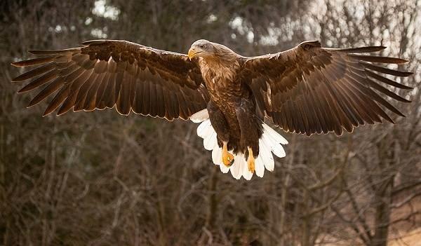 Птицы-Подмосковья-Названия-описания-и-особенности-птиц-Подмосковья-13