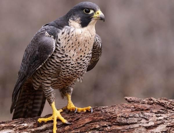 Птицы-Подмосковья-Названия-описания-и-особенности-птиц-Подмосковья-15