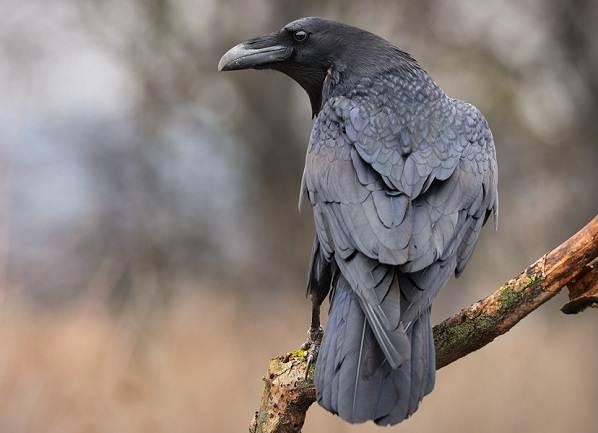 Птицы-Подмосковья-Названия-описания-и-особенности-птиц-Подмосковья-18