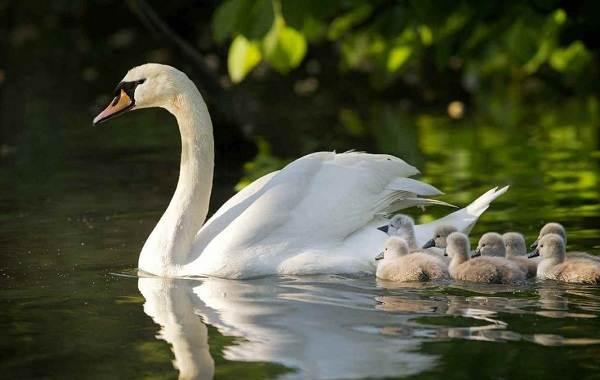 Птицы-Подмосковья-Названия-описания-и-особенности-птиц-Подмосковья-20