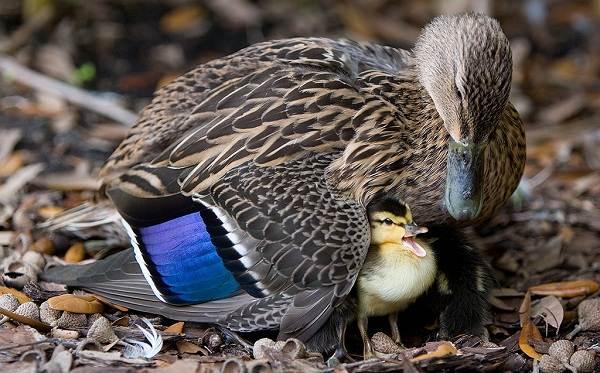 Птицы-Подмосковья-Названия-описания-и-особенности-птиц-Подмосковья-25