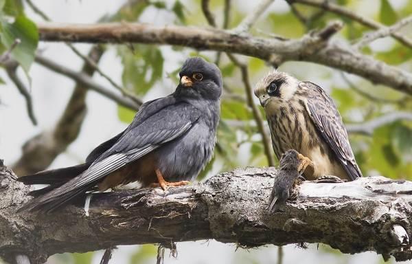 Птицы-Подмосковья-Названия-описания-и-особенности-птиц-Подмосковья-28