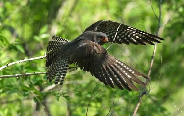Птицы-Подмосковья-Названия-описания-и-особенности-птиц-Подмосковья-29