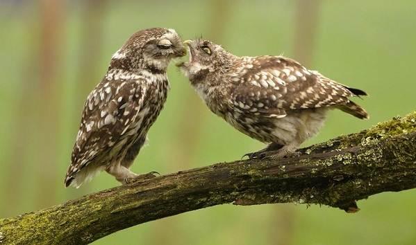 Птицы-Подмосковья-Названия-описания-и-особенности-птиц-Подмосковья-30