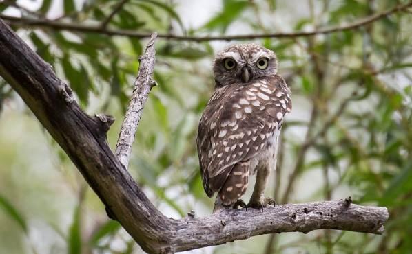 Птицы-Подмосковья-Названия-описания-и-особенности-птиц-Подмосковья-31