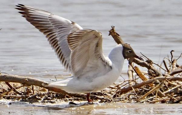 Птицы-Подмосковья-Названия-описания-и-особенности-птиц-Подмосковья-36