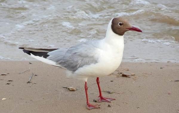Птицы-Подмосковья-Названия-описания-и-особенности-птиц-Подмосковья-37