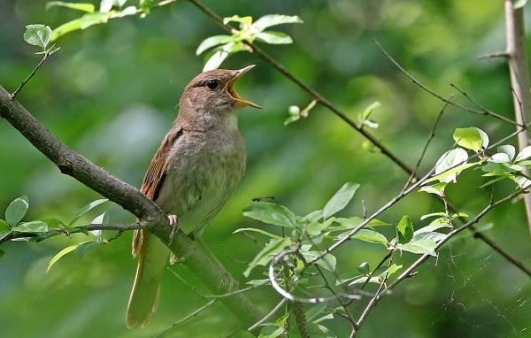 Птицы-Подмосковья-Названия-описания-и-особенности-птиц-Подмосковья-38