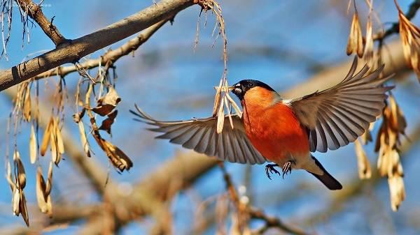 Птицы-Подмосковья-Названия-описания-и-особенности-птиц-Подмосковья-42