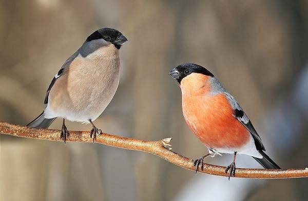 Птицы-Подмосковья-Названия-описания-и-особенности-птиц-Подмосковья-44