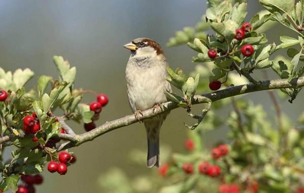 Птицы-Подмосковья-Названия-описания-и-особенности-птиц-Подмосковья-46