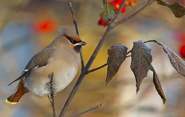 Птицы-Подмосковья-Названия-описания-и-особенности-птиц-Подмосковья-47