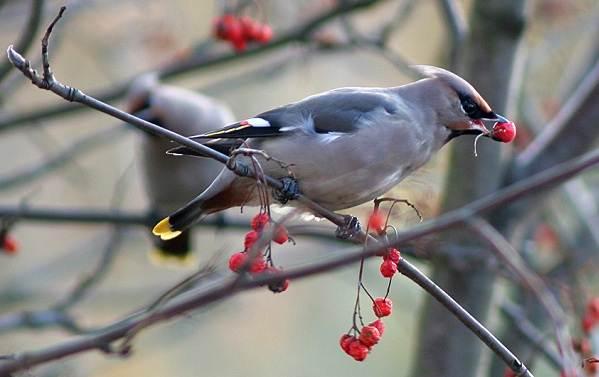 Птицы-Подмосковья-Названия-описания-и-особенности-птиц-Подмосковья-48