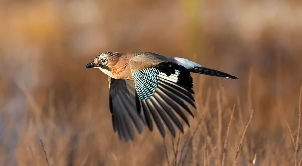 Птицы-Подмосковья-Названия-описания-и-особенности-птиц-Подмосковья-52