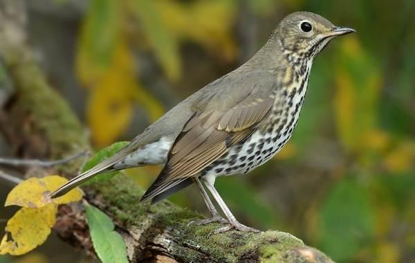 Птицы-Подмосковья-Названия-описания-и-особенности-птиц-Подмосковья-54