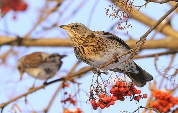 Птицы-Подмосковья-Названия-описания-и-особенности-птиц-Подмосковья-55