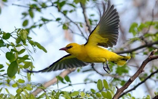 Птицы-Подмосковья-Названия-описания-и-особенности-птиц-Подмосковья-61