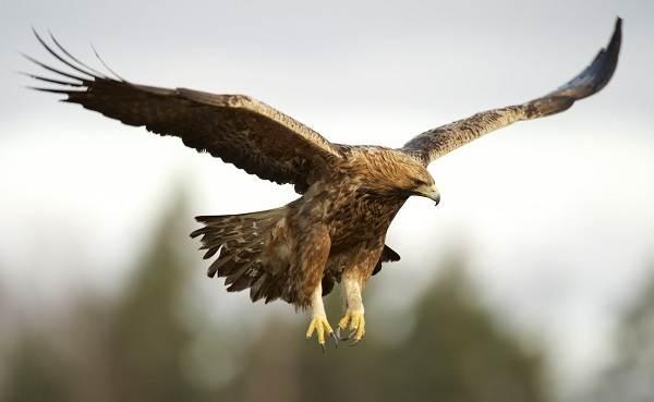Птицы-Подмосковья-Названия-описания-и-особенности-птиц-Подмосковья-7
