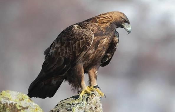 Птицы-Подмосковья-Названия-описания-и-особенности-птиц-Подмосковья-8