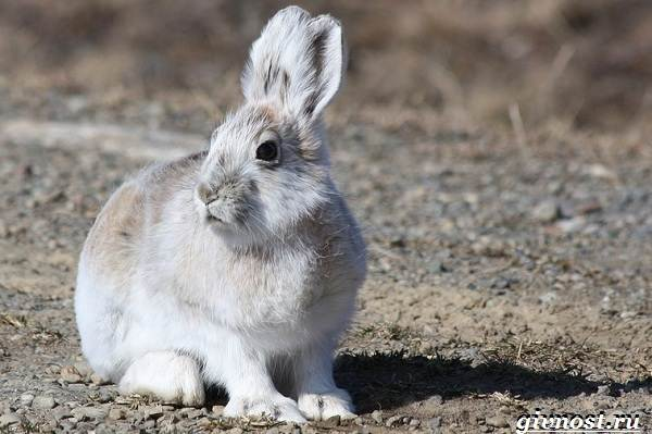 Животные-Арктики-Описание-названия-и-особенности-животных-Арктики-11