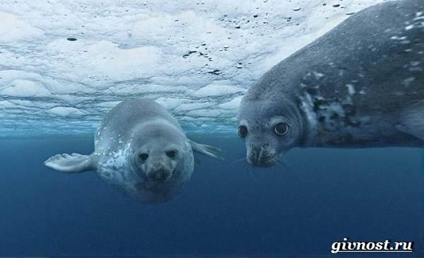 Животные-Арктики-Описание-названия-и-особенности-животных-Арктики-18