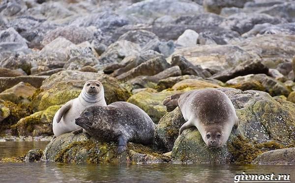 Животные-Арктики-Описание-названия-и-особенности-животных-Арктики-19