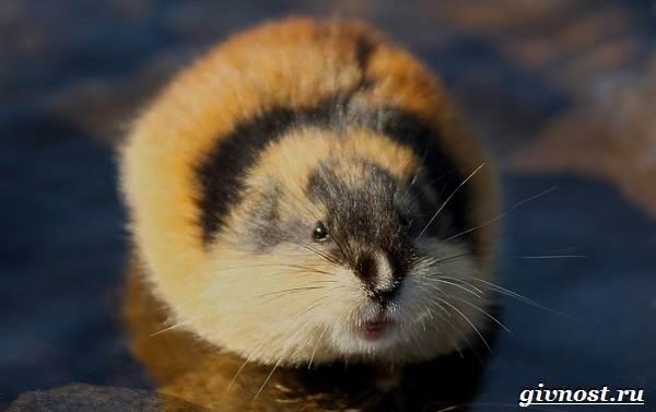 Животные-Арктики-Описание-названия-и-особенности-животных-Арктики-2