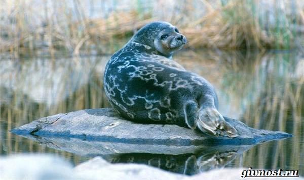 Животные-Арктики-Описание-названия-и-особенности-животных-Арктики-20