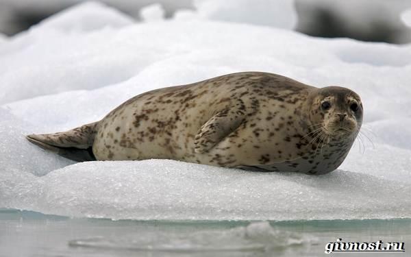 Животные-Арктики-Описание-названия-и-особенности-животных-Арктики-21