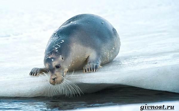 Животные-Арктики-Описание-названия-и-особенности-животных-Арктики-22