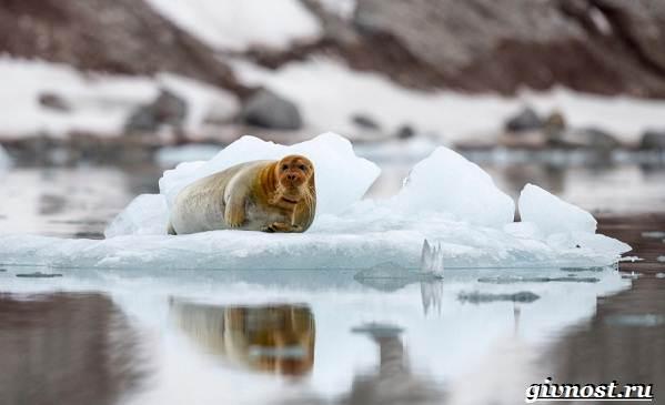 Животные-Арктики-Описание-названия-и-особенности-животных-Арктики-23
