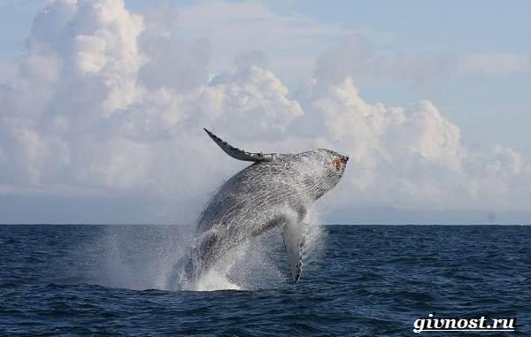 Животные-Арктики-Описание-названия-и-особенности-животных-Арктики-29