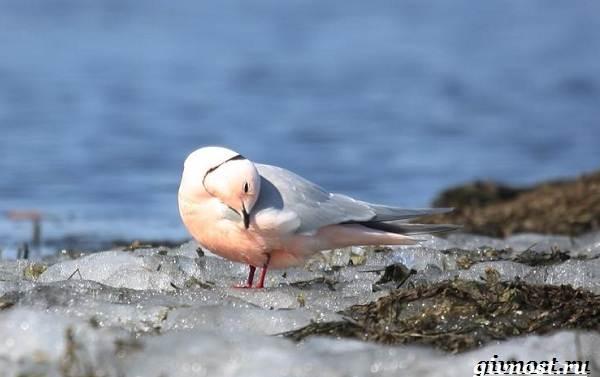 Животные-Арктики-Описание-названия-и-особенности-животных-Арктики-33