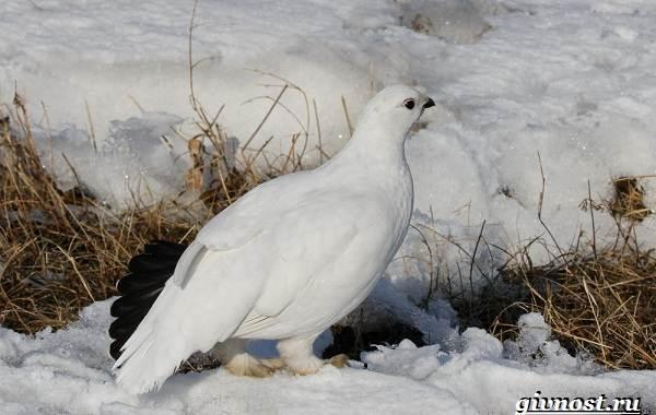 Животные-Арктики-Описание-названия-и-особенности-животных-Арктики-34