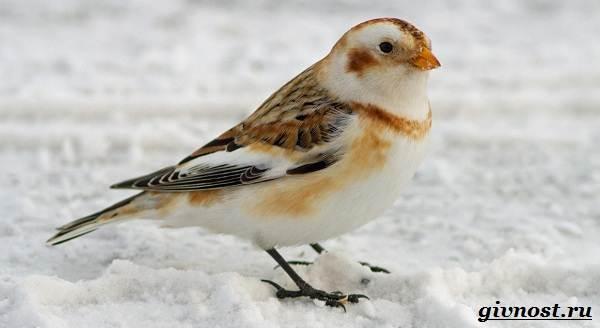 Животные-Арктики-Описание-названия-и-особенности-животных-Арктики-39