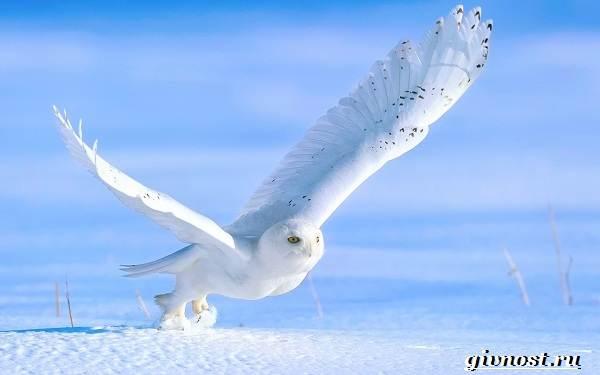 Животные-Арктики-Описание-названия-и-особенности-животных-Арктики-41
