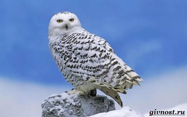 Животные-Арктики-Описание-названия-и-особенности-животных-Арктики-42