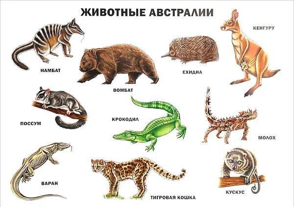Животные-Австралии-Описание-названия-и-особенности-животных-Австралии-1