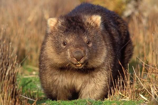 Животные-Австралии-Описание-названия-и-особенности-животных-Австралии-10