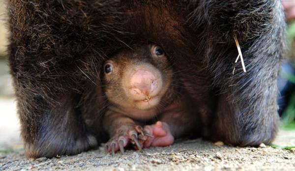 Животные-Австралии-Описание-названия-и-особенности-животных-Австралии-11