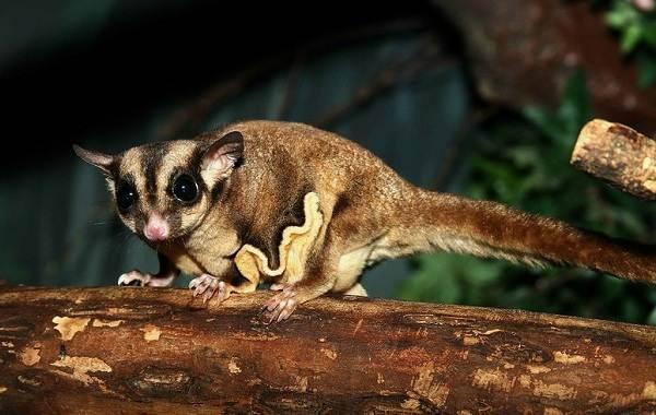 Животные-Австралии-Описание-названия-и-особенности-животных-Австралии-12