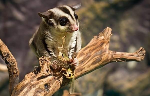 Животные-Австралии-Описание-названия-и-особенности-животных-Австралии-13