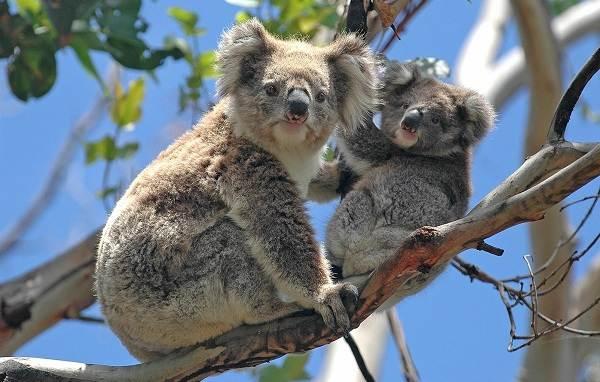 Животные-Австралии-Описание-названия-и-особенности-животных-Австралии-2