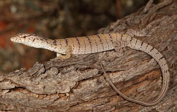 Животные-Австралии-Описание-названия-и-особенности-животных-Австралии-28