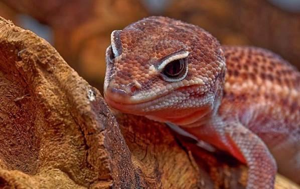 Животные-Австралии-Описание-названия-и-особенности-животных-Австралии-29