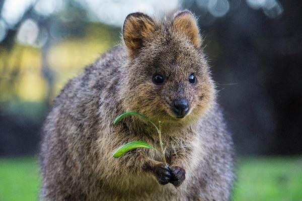 Животные-Австралии-Описание-названия-и-особенности-животных-Австралии-3