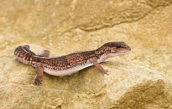 Животные-Австралии-Описание-названия-и-особенности-животных-Австралии-30